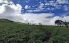 meadows enroute bhrigu lake