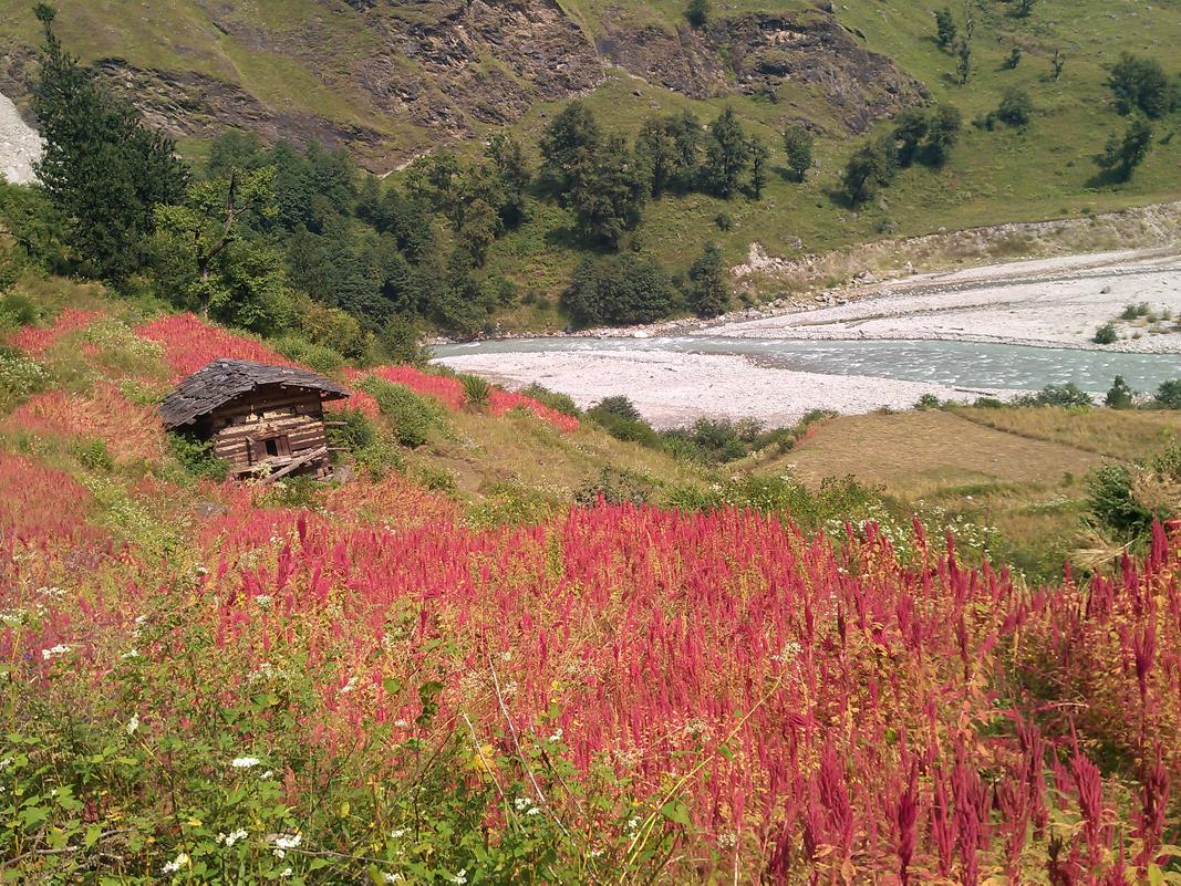 hut surrounded by the flowers with river flowing on side enroute
