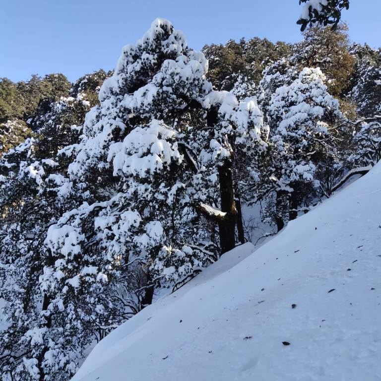 treeline covered with snow in december month