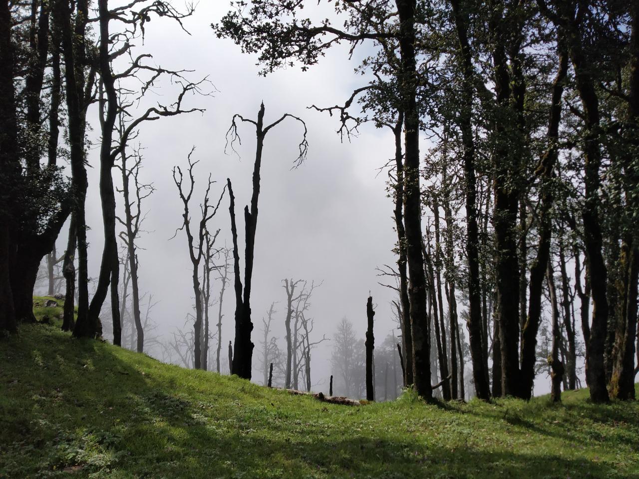 trail to nag tibba