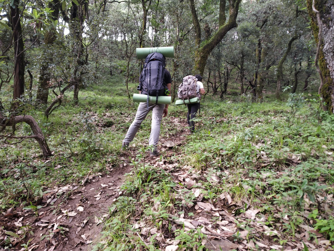 nag tibba trek in summer season