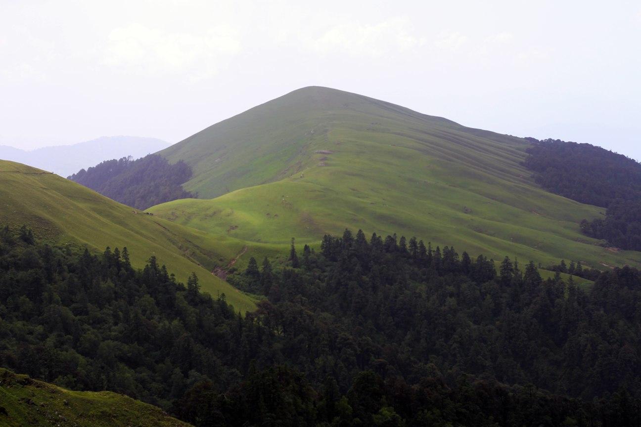 ending tree line of a dense forest enroute roopkund trek