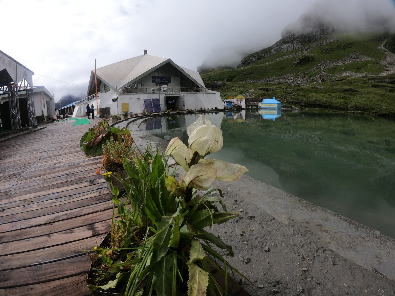 Flower blooming on side of a Hemkund lake with wooden path to houses with tin roof and distant mountain covered with green grass and fog covering the top of mountain