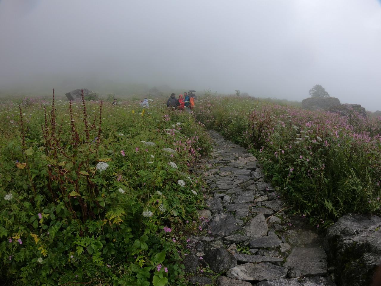 trekkers at valley of flowers uttarakhand